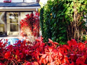 house fall photo