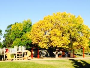 park fall photo