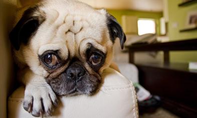 2019 wide eyed dog for begging